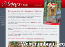 Détails : Elevage et chiots yorkshire terrier - Yorkshire terriers Majeya's Way - Gard